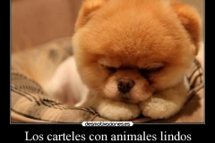 animales-lindos-14