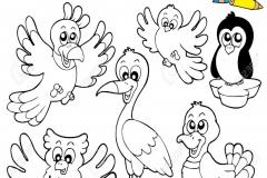 libro para colorear con aves lindos ilustraci??n ilustraciones