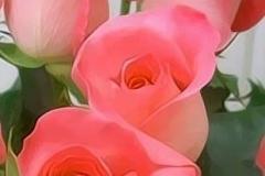 88 Mejores Imgenes De Rosas En Pinterest Flores Bonitas Flores Amazing Flores Y Rosas