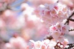 flores-bellas-07