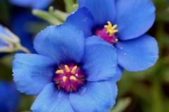 flores-bellas-09