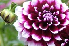 flores-bellas-10