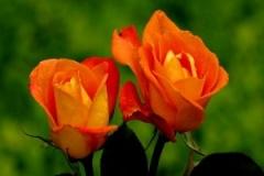 flores-bellas-12