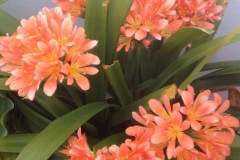 flores-bellas-13