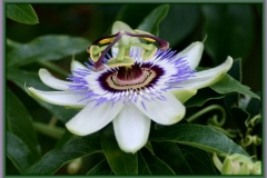 flores-bellas-14