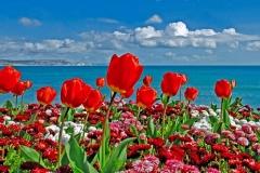 flores-bellas-16