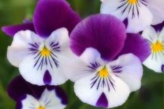 flores-bellas-17