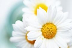 flores-bellas-19