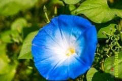flores-bellas-20