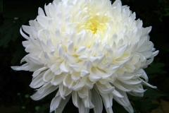 flores-bellas-22