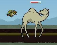 Pájaros vs camellos